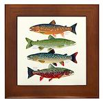 4 Char fish Framed Tile