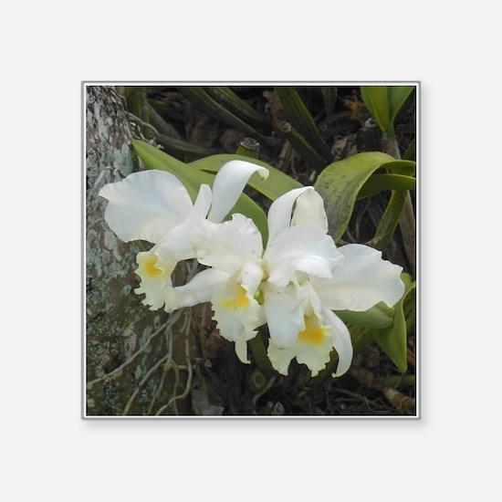 "Cattleya Orchids Square Sticker 3"" x 3"""