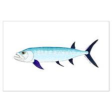 Xiphactinus audax fish Posters