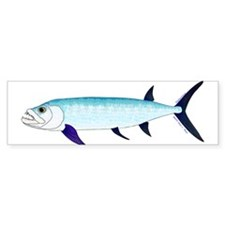 Xiphactinus audax fish Bumper Sticker
