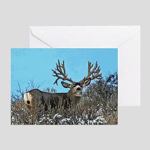 Trophy mule deer buck b Greeting Card
