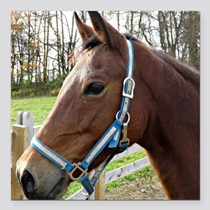 "Morgan Horse in Field Square Car Magnet 3"" x 3"""