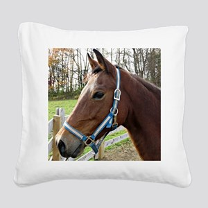 Morgan Horse in Field Square Canvas Pillow
