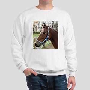 Morgan Horse in Field Sweatshirt