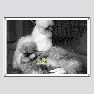 Black and White Silkie Chickens with yellow Banner