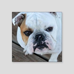 "English Bulldog Square Sticker 3"" x 3"""