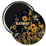 Kansas Wild Sunflowers Magnet