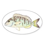 Pigfish Sticker