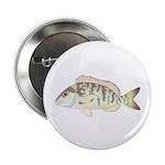 Pigfish 2.25