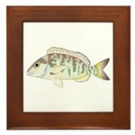 Pigfish Framed Tile