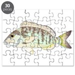 Pigfish Puzzle