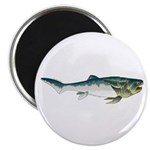 Dunkleosteus fish Magnets