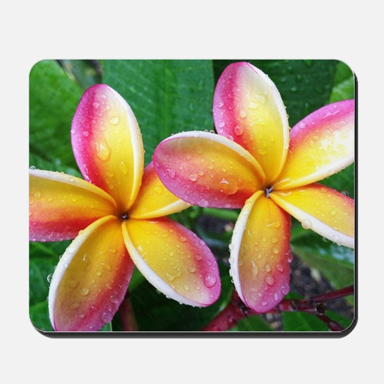 Maui Plumeria Tropical Flower Mousepad