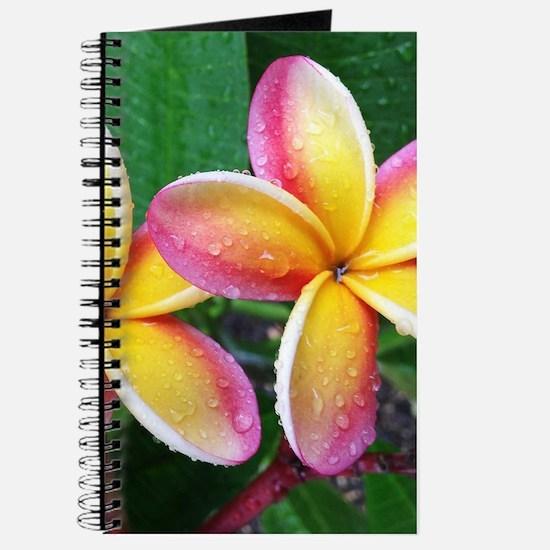 Maui Plumeria Tropical Flower Journal