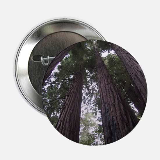 "Cool Redwoods california 2.25"" Button (10 pack)"