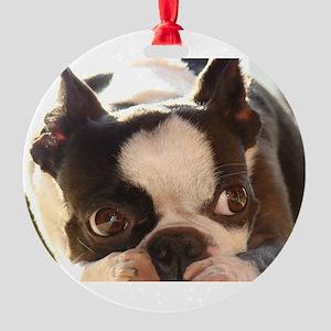 Adorable Jewels Ornament
