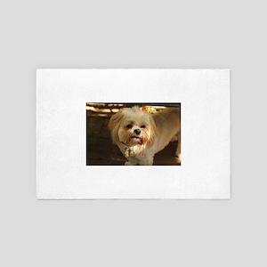 Koko blondLhasa looking dubious 4' x 6' Rug