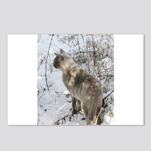 Burmese Cat in snow Postcards (Package of 8)