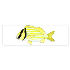 Porkfish Bumper Bumper Sticker