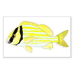 Porkfish Decal