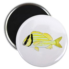 Porkfish Magnets
