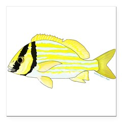 Porkfish Square Car Magnet 3