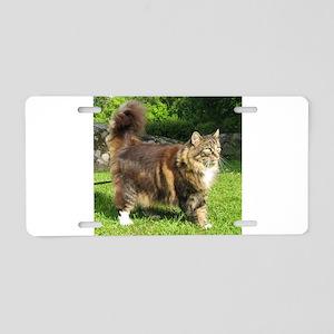 norwegian forest cat full tabby Aluminum License P