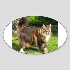 norwegian forest cat full tabby Sticker