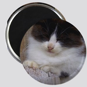Black and White Kitten Napping Magnets