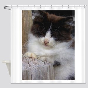 Black and White Kitten Napping Shower Curtain