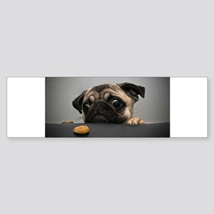 Cute Pug Bumper Sticker