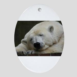 Polar bear 011 Ornament (Oval)