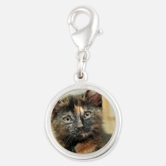 Rare Male Tortie Kitten Silver Round Charm