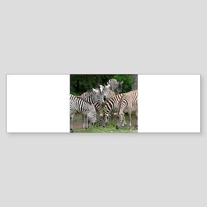 Zebra_2014_1101 Bumper Sticker
