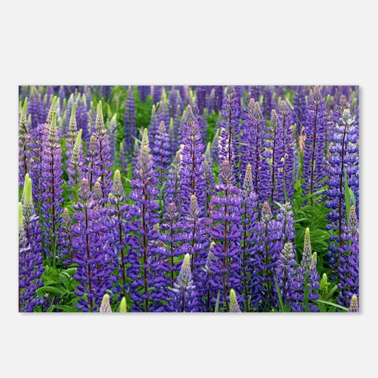 Lupine Forest Postcards (Package of 8)