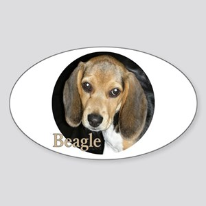 Close Up Puppy Beagle Sticker (Oval)