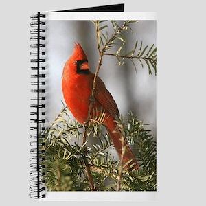 Winter Cardinal Journal