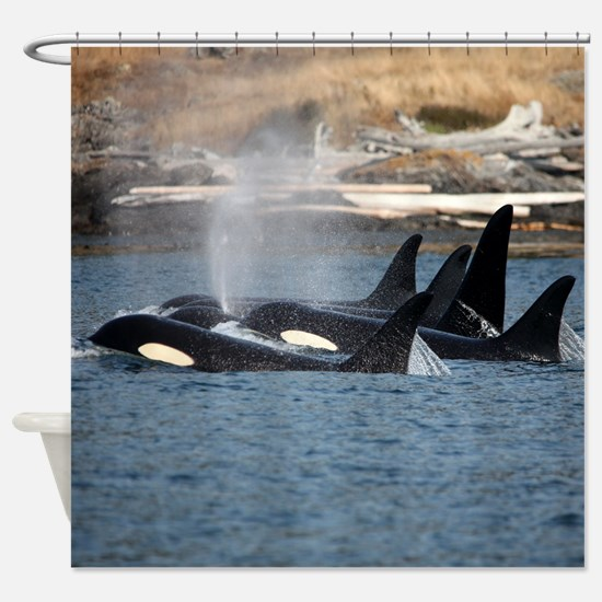 Cute Southern resident killer whales Shower Curtain