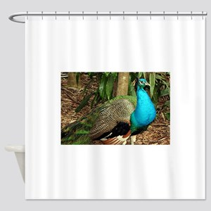 Peacock bird brightly colored Shower Curtain