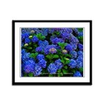 EDF Hydrangea Framed Panel Print