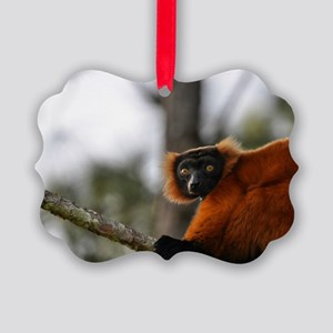 Red Ruffed Lemur Holiday Picture Ornament