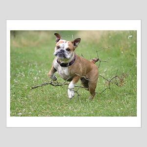 English bulldog Small Poster
