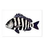 Sheepshead porgy Postcards (Package of 8)
