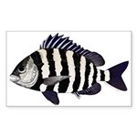 Sheepshead porgy Sticker