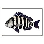Sheepshead porgy Banner
