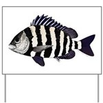 Sheepshead porgy Yard Sign