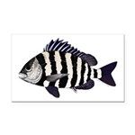 Sheepshead porgy Rectangle Car Magnet