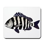 Sheepshead porgy Mousepad