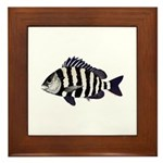 Sheepshead porgy Framed Tile