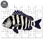 Sheepshead porgy Puzzle